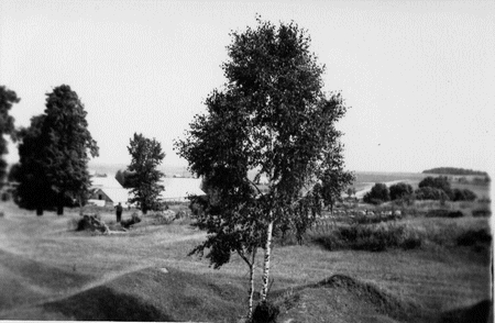 Majątek Skarbiec pozostałości - widok z tyłu dworu (z brzózką na pierwszym planie)
